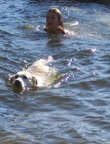 swim in the lake with your dog